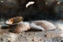 Muscheln von Sonja Teßen