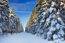 Trail through beautiful winter forest on a clear day by Sara Winter
