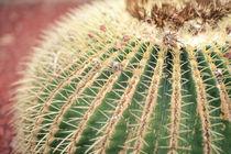 Nahaufnahme von Kaktus by Jochen Conrad