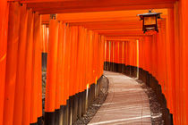 Torii gates of the Fushimi Inari Shrine in Kyoto, Japan by Sara Winter