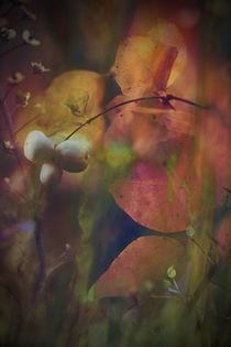 IM FARBENRAUSCH von © Ivonne Wentzler
