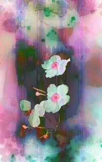 Blüten von barbaram