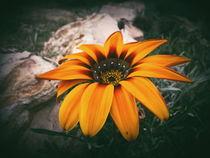 Sun grass by Mirela Oprea