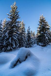 Snow von Simon Kirchmair