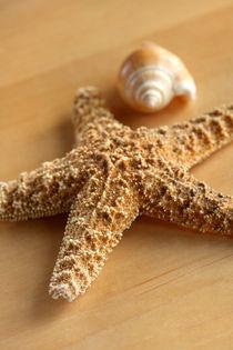 Seestern und Schnecke von lizcollet