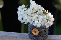 Zwetschgenblüten  by lizcollet