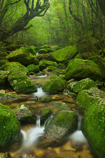 River along Shiratani Unsuikyo rainforest trail on Yakushima Island, Japan von Sara Winter