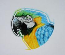 Papegaai-tsm
