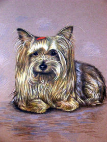 Yorkshire Terrier by Nicole Zeug