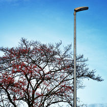lampion by Gerald Prechtl