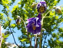 Violet flowers von esperanto