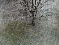 Winterzauber, Schneeflocken, Baum, magic winter, snowflakes,landscape, tree by Dagmar Laimgruber