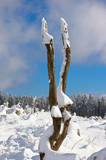 Gebrochener-baum-im-winter