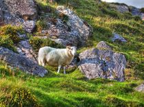 The Sheep - Das Schaf von Christoph Stempel