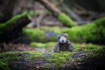 Little Friend by Susanne Schröder