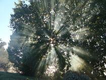 Gods Light by Panda Broad