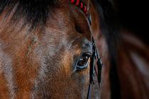 Pferdeaugen lügen nicht by cavallo-magazin