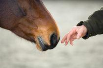 Sanfte Annäherung  by cavallo-magazin