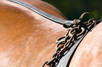 Kutschpferd in Pose by cavallo-magazin