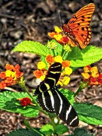 Signew-monarchbutterflyandzebrabutterfly