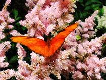 Signew-juliabutterflyonpinkflowers