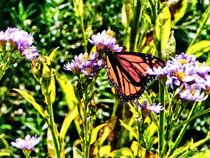Signew-monarchbutterflyonpurplewildflower