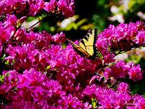 Signew-tigerswallowtailonazalea-copy