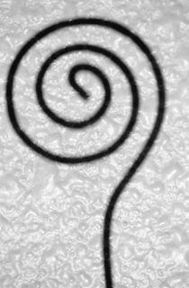 Circle of Life by Jim Corwin