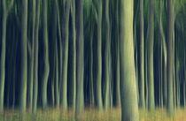 .. im Gespensterwald .. by gugigei