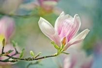 Magnolie by Nailia Schwarz
