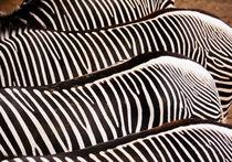 Zebrastreifen - stripes von gugigei