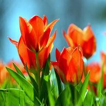 Frühlingsboten von gugigei