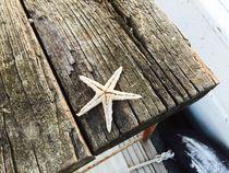 Sea Star by Azzurra Di Pietro