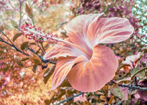 Fantasy Colors Hibiscus Flower Digital Art by Daniel Ferreira Leites Ciccarino