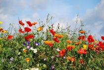 Blumenwiese by gugigei