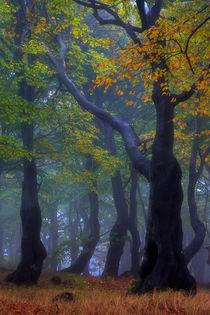 gespenstisch schöner Herbst von moqui