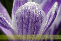 Mp-springsession-2013-23