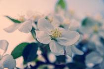 Springtime by cinema4design