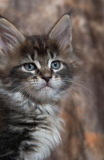 Dsc-0339-dot-mc-kitten13-02-16