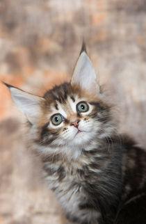 Dsc-0221-dot-mc-kitten15-02-16