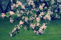 Blossoming Spring Garden by cinema4design