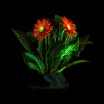 Glowing Gerbera 7073 von Mario Fichtner