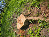 Stump of the cut tree on the edge of the forest von Vladislav Romensky
