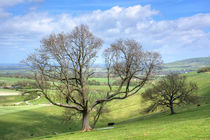 Early Spring on Steyning Bowl by Malc McHugh