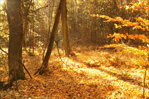 Goldener Herbst by darlya