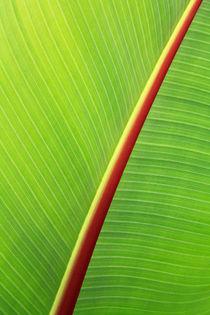 Bananenblatt by EinWinkel Photography