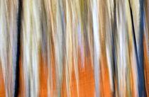 - Herbstwald - by gugigei