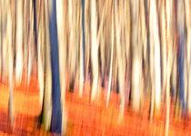 - Herbstwald - II by gugigei