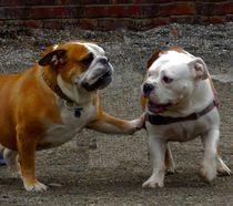 DOGS FRIENDSHIP. by Maks Erlikh