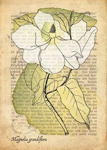 Magnolia Grandiflora by mare